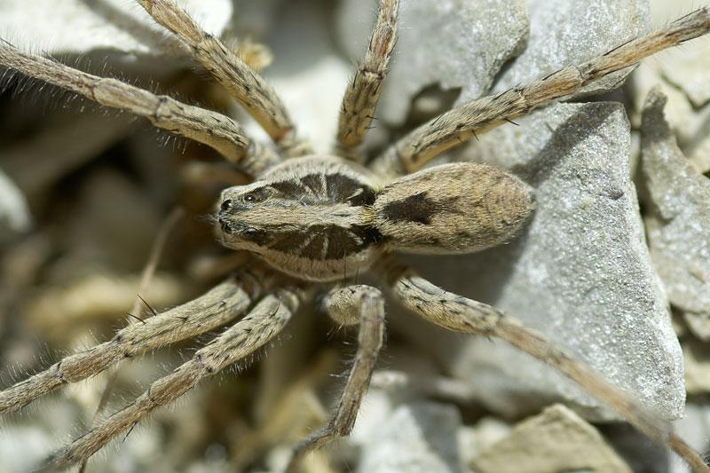 Spinnen In Kroatien